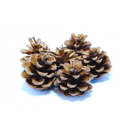 School Craft Pine Cones [Pack 30]