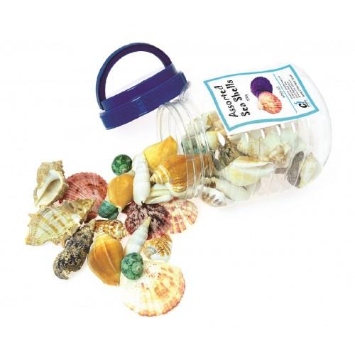 Bucket Of Shells