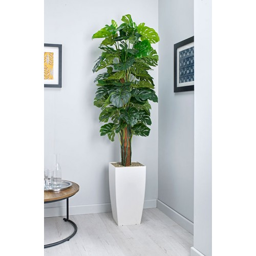 Cheese Plant on Pole Floor Standing Planter