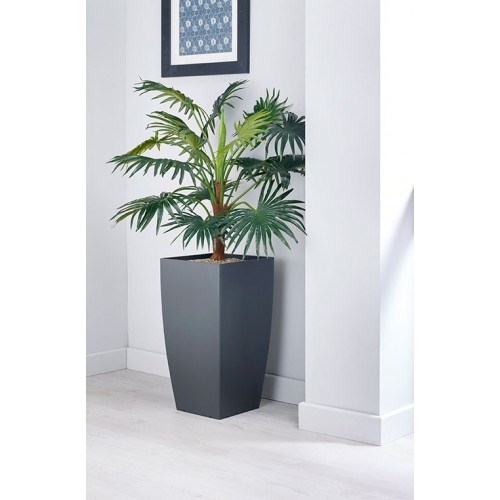 Chinese Fan Palm Floor Standing Plant