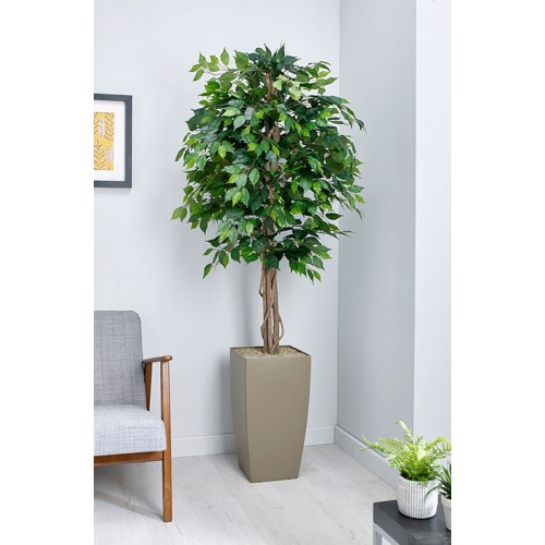 Green Weeping Fig Floor Standing Planter | BAK-08-10 | BAK