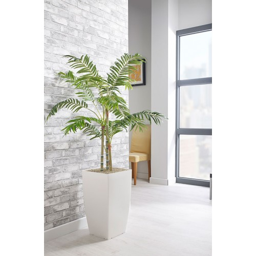 Parlour Palm Floor Standing Planter