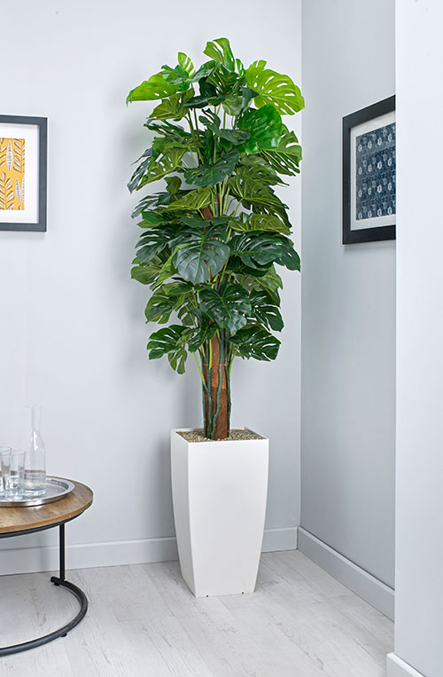Cheese Plant Artificial Plant