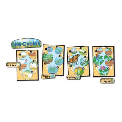 Life Cycles Bulletin Board Set