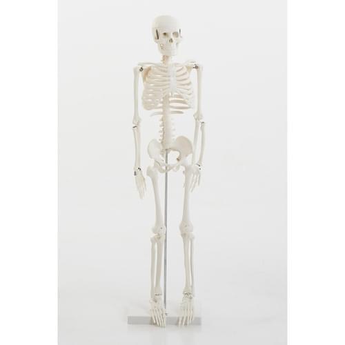 TickiT Half-scale Skeleton