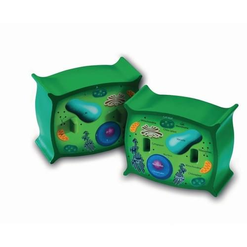 Soft Foam Cross-section Plant Cell