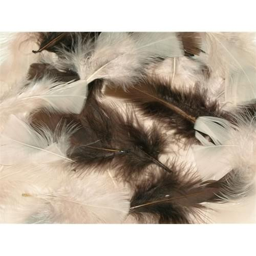 Natural Feathers
