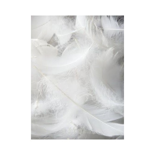 Feathers White pack 200