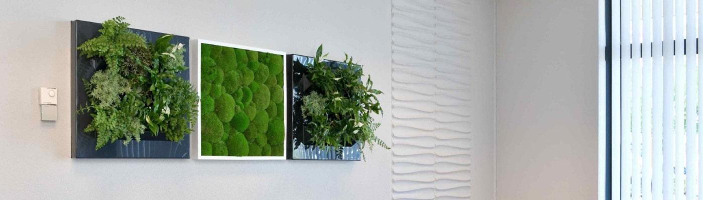 FAQs Plant Frames