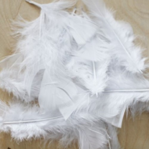 Feathers White (Pack of 200)